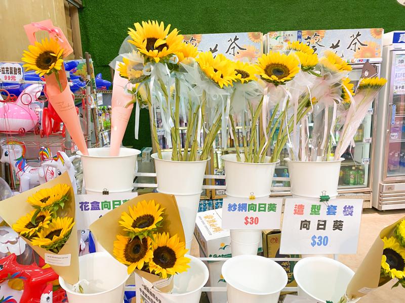 向陽農場向日葵