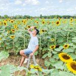 2021向陽農場懶人包:交通、購票方式、園區介紹一次幫你整理好!一睹北台灣最大的向日葵花海