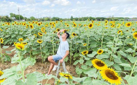桃園⎜2020向陽農場懶人包:交通、購票方式、園區介紹一次幫你整理好!一睹北台灣最大的向日葵花海